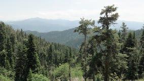 Bergenmening in het nationale park van Borjomi Kharagauli - Georgië stock video
