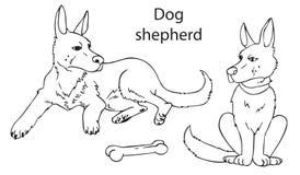 Berger allemand de chien sur le fond blanc Photographie stock libre de droits