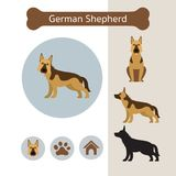 Berger allemand Dog Breed Infographic Image stock