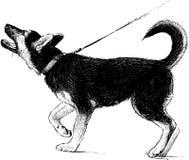 Berger allemand Puppy Photo libre de droits