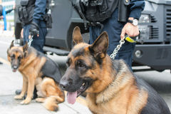 Berger chien-allemand de police Photographie stock