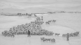 Berger d'hiver photographie stock libre de droits