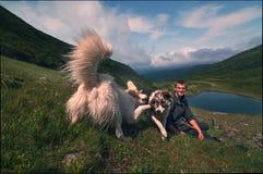 Berger et chien-loup Image stock