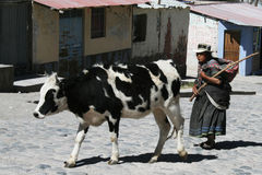 Berger péruvien Images libres de droits
