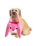 Berger pyrénéen Dog Sitting et tenir le panier de Pâques Photos libres de droits