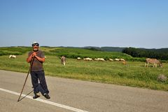 Berger roumain avec des moutons et des ânes dans la campagne photo libre de droits