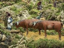 Berger Scene avec des vaches Photos libres de droits