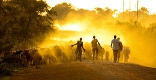 Bergers africains Photos libres de droits