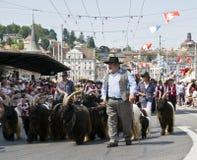 Bergers alpestres suisses avec un troupeau de bouquetin Photographie stock