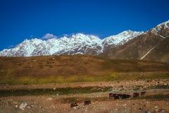 Bergers de montagne Photographie stock libre de droits