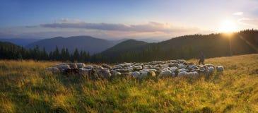 Bergers et moutons Carpathiens Image stock