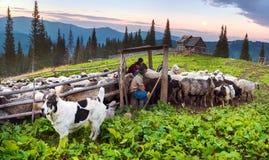 Bergers et moutons Carpathiens Photographie stock libre de droits