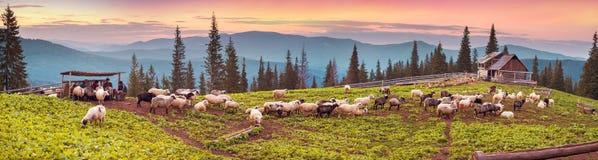 Bergers et moutons Carpathiens Image libre de droits