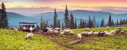 Bergers et moutons Carpathiens Photographie stock