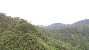 Berget överträffar fyllt med naturliga fullvuxna träd lager videofilmer