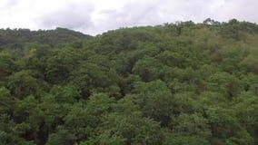 Berget överträffar fyllt med naturliga fullvuxna träd arkivfilmer