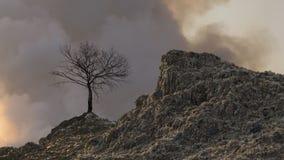 Berget av avfall och det döda trädet royaltyfria bilder