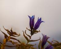 Berget blommar i höstperioden royaltyfria foton