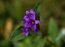 Berget blommar i höstperioden fotografering för bildbyråer