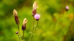 Berget blommar i höstperioden Arkivfoton