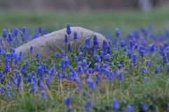 Berget blommar muscarien Landskap Royaltyfria Foton