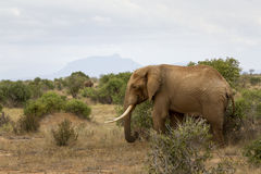 Berget & elefanten Royaltyfria Bilder