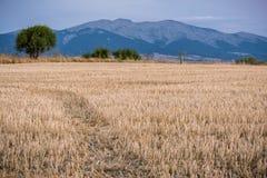 Berget populärt kallade Död Kvinna i Segovia lokaliseras i den Guadarrama nationalparken arkivbilder