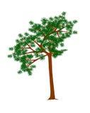 Berget sörjer trädet. Royaltyfri Bild