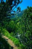 Berget som fotvandrar vägvägen över pinjeskogen och, vaggar Amazi Arkivfoton