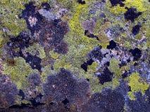 Berget stenar bevuxet med mossa av de Brenta dolomitesna Royaltyfri Bild