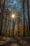 Berget tar färg under hösten Fotografering för Bildbyråer