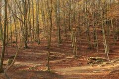 Berget tar färg under hösten Arkivfoton