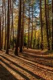 Berget tar färg under hösten Arkivbild