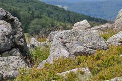 Berget vaggar detaljen arkivbilder