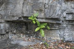 Berget vaggar yttersida med stratum arkivfoton