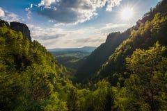 Bergexaltation av skogen royaltyfria bilder