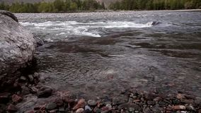Bergflod, Altai, Ryssland arkivfilmer