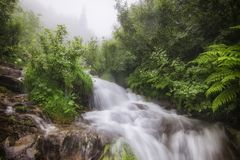 Bergflod av Dzembronya i de ukrainska Carpathiansna royaltyfri fotografi