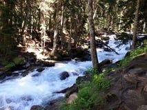 Bergflod, Dombay Royaltyfria Foton