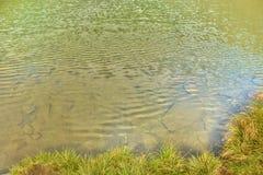 Bergflod i bergen Royaltyfri Foto