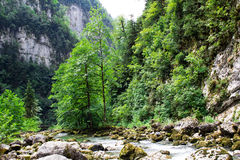 Bergflod i bergen av Abkhazia Arkivfoto