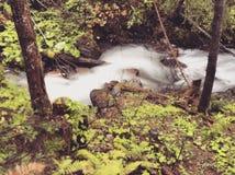 Bergflod i Carpathians Fotografering för Bildbyråer