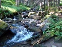 Bergflod i Carpathiansna royaltyfri foto