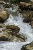 Bergflod i de Carpathian bergen royaltyfria foton