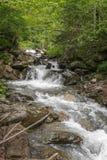 Bergflod i de Carpathian bergen arkivfoto