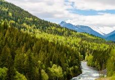 Bergflod i den färgrika skogen av British Columbia - Kanada Fotografering för Bildbyråer