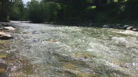 Bergflod i den gröna skogen stock video