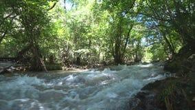 Bergflod i lövskogen arkivfilmer