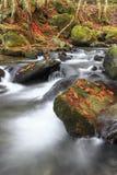 Bergflod i sen höst Arkivfoton