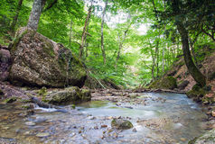 Bergflod i skog Royaltyfri Bild